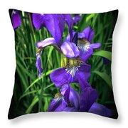 Colors Of Iris Throw Pillow