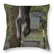 They Call Him The Streak  Throw Pillow