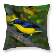 Thick-billed Euphonia Throw Pillow