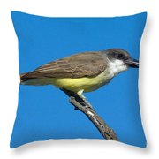 Thick-billed Kingbird Tyrannus Throw Pillow
