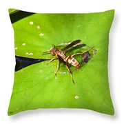 Thirsty Bee On Waterlily Throw Pillow