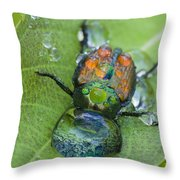 Thirsty Beetle Throw Pillow