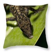 Thirsty Brown Anole Throw Pillow