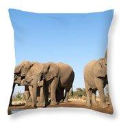 Thirsty Elephant Herd Throw Pillow