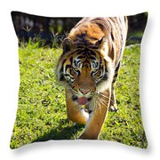 Thirsty Tiger Throw Pillow