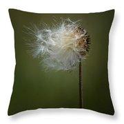 Thistle 14-4 Throw Pillow
