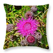 Thistle In Saint Mary's Ecological Reserve-newfoundland Throw Pillow