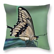 Thoas Swallowtail Butterfly Throw Pillow
