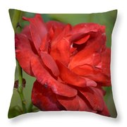 Thorny Red Rose Throw Pillow
