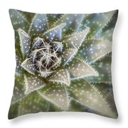 Thorny Succulent Throw Pillow