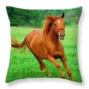 Thoroughbred Filly Throw Pillow
