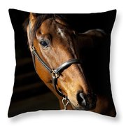 Thoroughbred Race Horse Throw Pillow