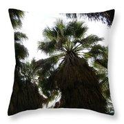 Thousand Palms Canyon Throw Pillow