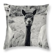Three Alpaca Friends Throw Pillow