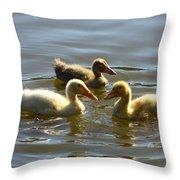 Three Baby Ducks Swimming Throw Pillow