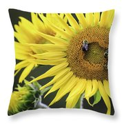 Three Bees On A Sunflower Throw Pillow