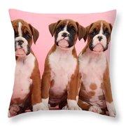 Three Boxer Puppies Throw Pillow