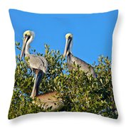 Three Brown Pelicans Throw Pillow
