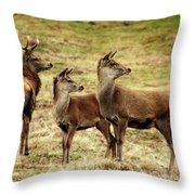 Wildlife Three Red Deer Throw Pillow