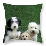 Three Diffferent Puppies Throw Pillow