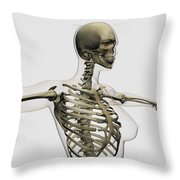 Three Dimensional View Of Female Rib Throw Pillow by Stocktrek Images