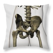 Three Dimensional View Of Human Pelvic Throw Pillow