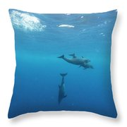 Three Dolphins Swimming Underwater Throw Pillow