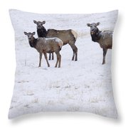 Three Elk Cows And Calf Throw Pillow