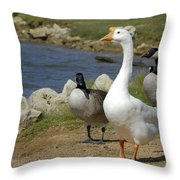 Three Geese Just Srolling Along Throw Pillow