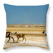 Three Goats In A Desert Throw Pillow