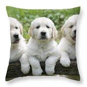 Three Golden Retriever Puppies Throw Pillow