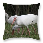 Three Ibis Together Throw Pillow
