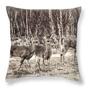 Three In The Field Throw Pillow