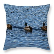 Three Mallard Ducks Throw Pillow