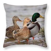 Three Mallards Card - Ducks Throw Pillow