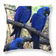 Three Pals Throw Pillow by Kathleen Struckle
