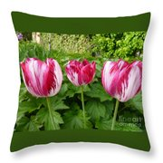 Three Pink Rembrandt Tulips Throw Pillow