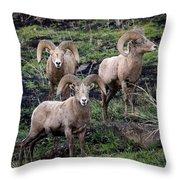 Three Rams Throw Pillow