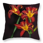 Three Red Daylilies Throw Pillow