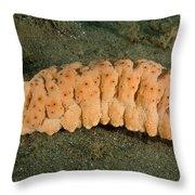 Three-rowed Sea Cucumber Throw Pillow