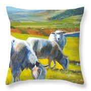 Three Sheep On A Devon Cliff Top Throw Pillow