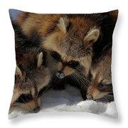 Three Sweet Raccoons Throw Pillow
