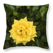 Three Yellow Roses In Rain Throw Pillow