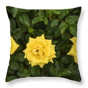 Three Yellow Roses Throw Pillow