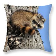 Three Young Raccoons Throw Pillow