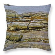Thrombolites Up Close In Flower's Cove-nl Throw Pillow