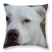 Through The Eyes Of A Pitbull II  Throw Pillow