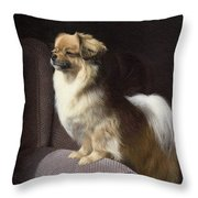 Tibetan Spaniel Painting Throw Pillow