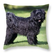 Tibetan Terrier Dog Standing Throw Pillow