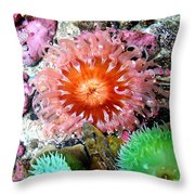 Tide Pool Creatures Throw Pillow